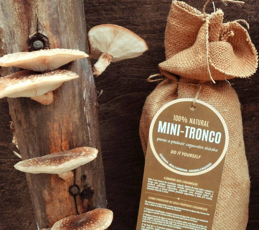 66af60f20 Mushi - Taste the forest | Cogumelos biológicos | Simbiotico.eco