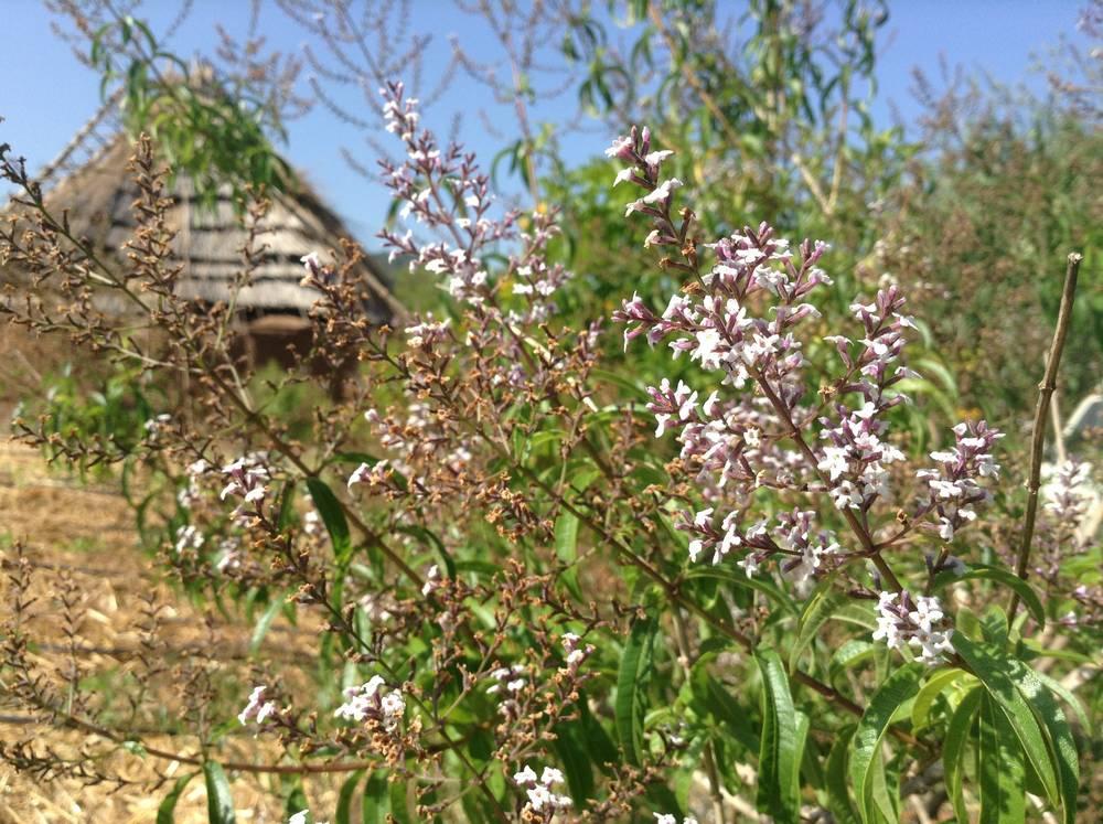 Quinta dos 7 Nomes   Permacultura