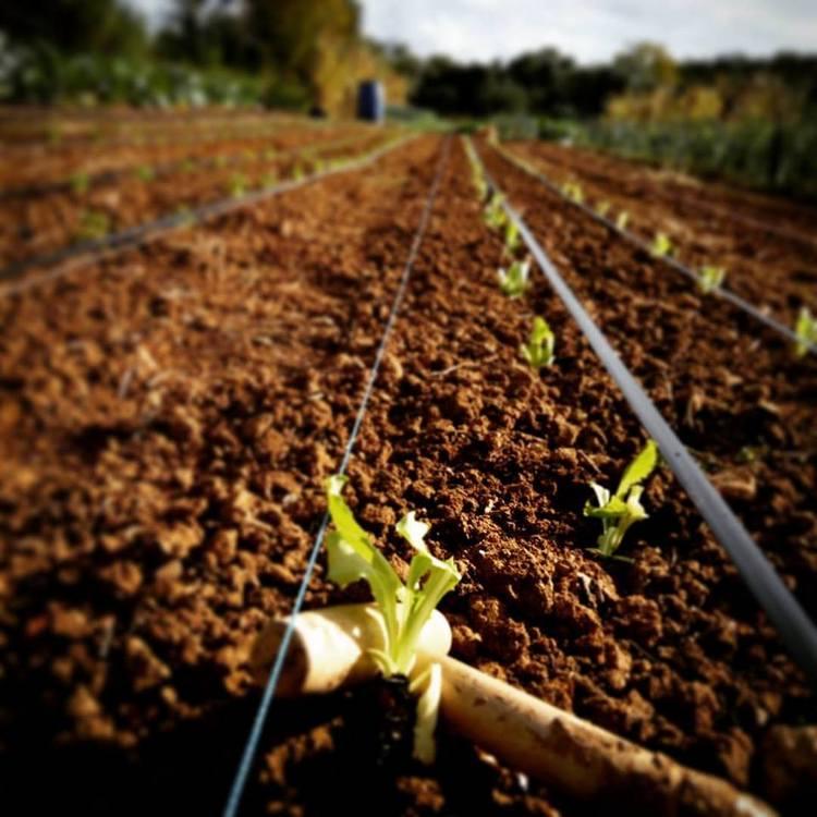 Quinta do Alecrim | Agricultura biológica