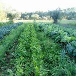 Quinta do Alecrim | Sistemas agro-florestais
