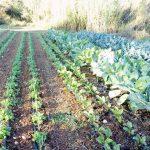 Quinta do Alecrim | Produção biológica