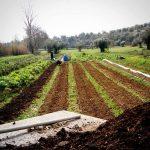 Quinta do Alecrim | Permacultura