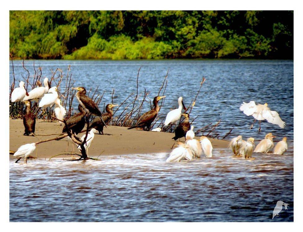 Rio-a-Dentro | Observação de aves no Tejo